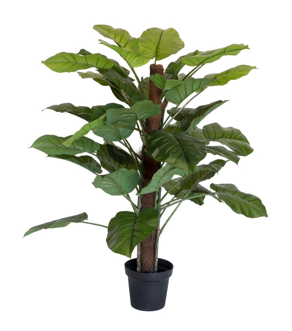 Holly Collection | Potted Pothos Plant | 130cm