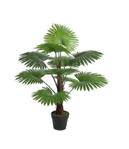 Holly Collection | Potted Fan Palm | 100cm