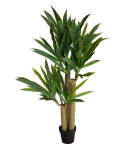 Holly Collection | Potted Dracaena Tree | 120cm