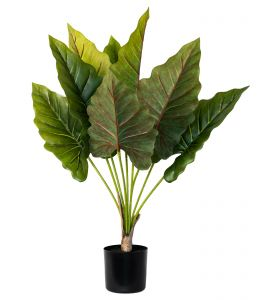 Holly Collection | Potted Elephant Ear Plant | 73cm