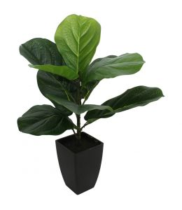 Holly Collection | Potted Baby Fiddle Leaf Plant | 46cm