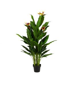 Holly Collection |  Potted Birds of Paradise Plant | 152cm