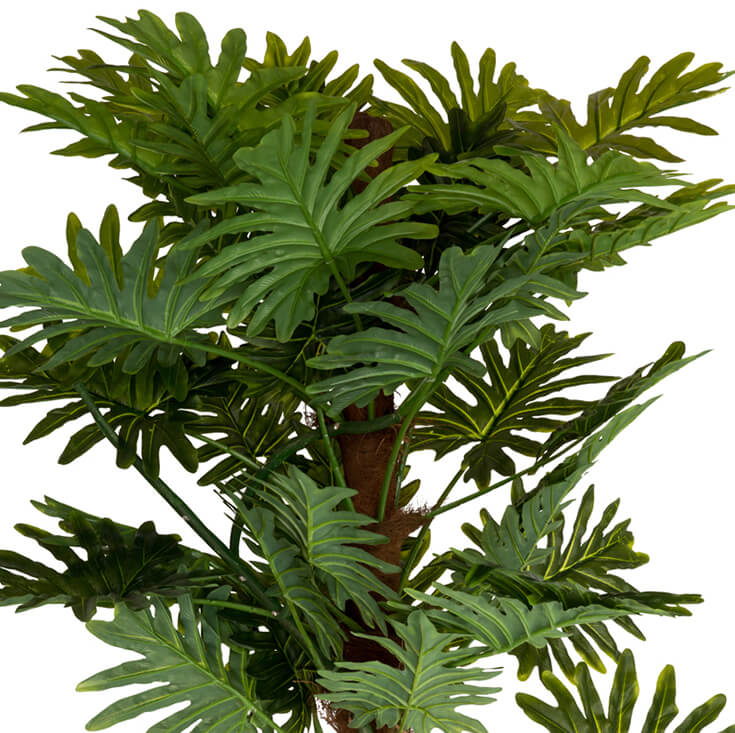 Holly Collection | Potted Monstera Plant | 130cm