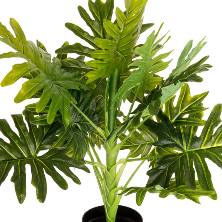 Holly Collection | Potted Monstera Plant | 70cm
